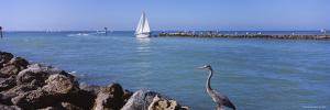 Great Blue Heron Perching on a Rocks, South Jetty, Venice, Sarasota County, Florida, USA