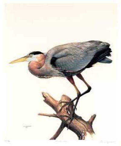 Great Blue Heron-James Fenwick Lansdowne-Collectable Print