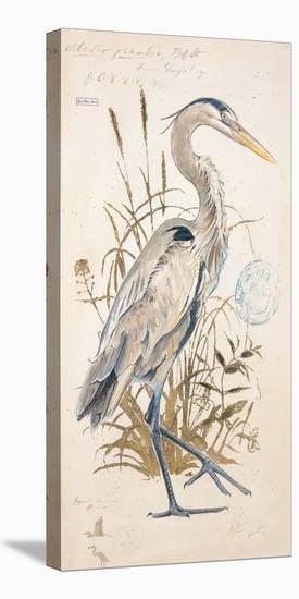 Great Blue Heron-Chad Barrett-Stretched Canvas Print