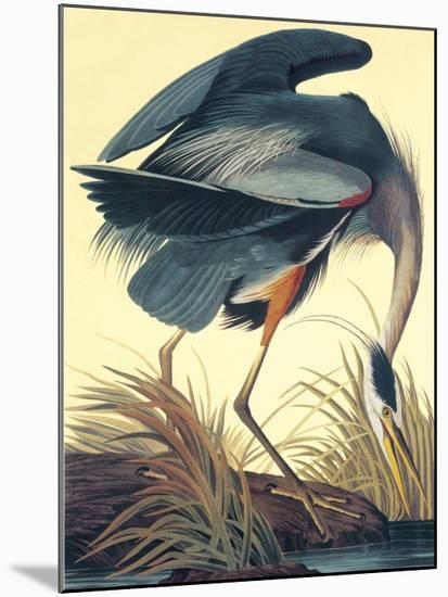 Great Blue Heron-John James Audubon-Mounted Art Print
