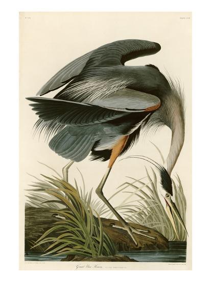 Great Blue Heron-John James Audubon-Premium Giclee Print