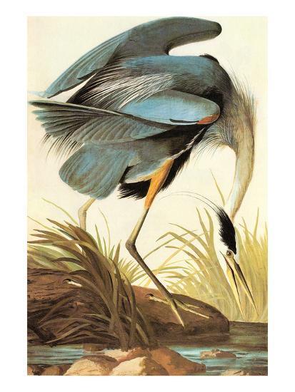 Great Blue Heron-John James Audubon-Art Print