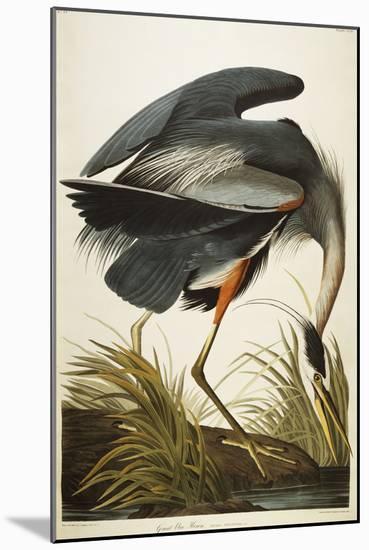Great Blue Heron-John James Audubon-Mounted Giclee Print