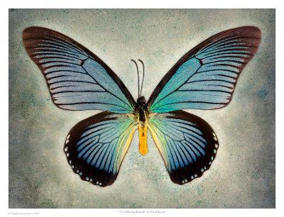 Great Blue Swallowtail-Richard Reynolds-Art Print