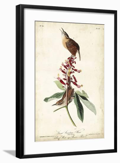 Great Carolina Wren-John James Audubon-Framed Art Print