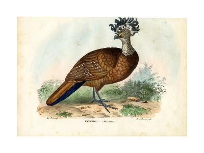 Great Curassow, 1863-79-Raimundo Petraroja-Giclee Print