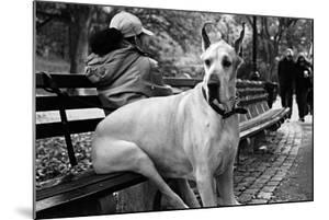 Great Dane in Central Park NYC B/W
