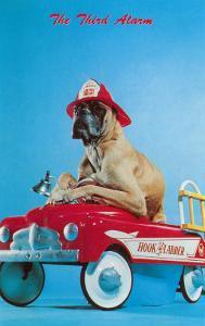 Great Dane in Toy Fire Wagon, Third Alarm