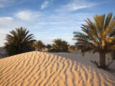 Great Dune at Dawn, Douz, Sahara Desert, Tunisia-Walter Bibikow-Photographic Print