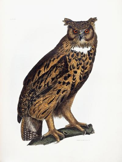 Great Eared Owl, 1841-Prideaux John Selby-Giclee Print