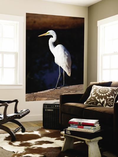 Great Egret on Gibb River-Kerry Lorimer-Wall Mural