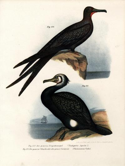Great Frigate Bird, 1864--Giclee Print