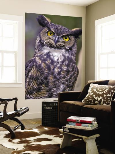 Great Horned Owl-Janis Miglavs-Wall Mural