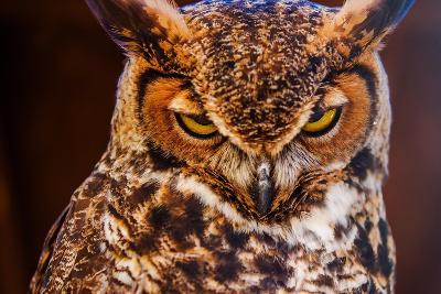 Great Horned Own-duallogic-Photographic Print