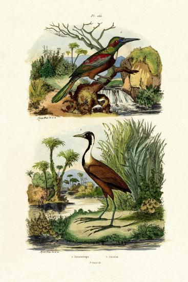 Great Jacamar, 1833-39--Giclee Print