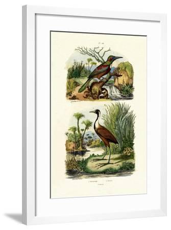 Great Jacamar, 1833-39--Framed Giclee Print