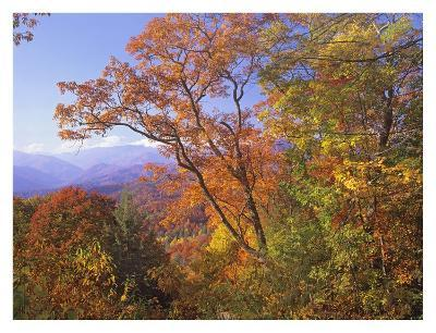 Great Smoky Mountains from, Blue Ridge Parkway, North Carolina-Tim Fitzharris-Art Print