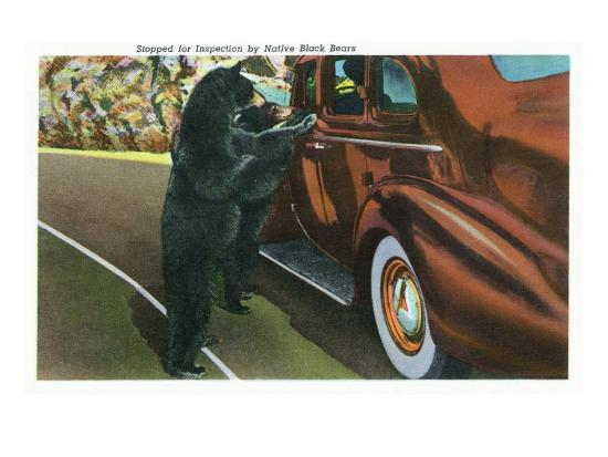 Great Smoky Mts. Nat'l Park, Tn - View of a Car Being Stopped by Native Black Bears, c.1940-Lantern Press-Art Print