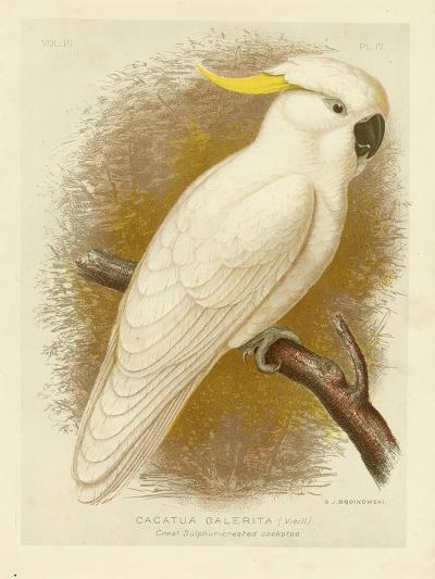 Great Sulphur-Crested Cockatoo, 1891-Gracius Broinowski-Giclee Print