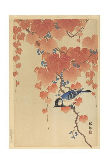 Great Tit on Paulownia Branch, 1925-36-Ohara Koson-Giclee Print