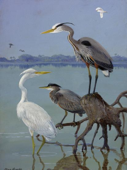 Great White and Blue Herons Perch on a Tree Trunk in Shallow Waters-Allan Brooks-Giclee Print