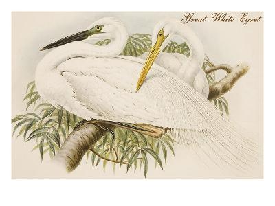 Great White Egret-John Gould-Art Print