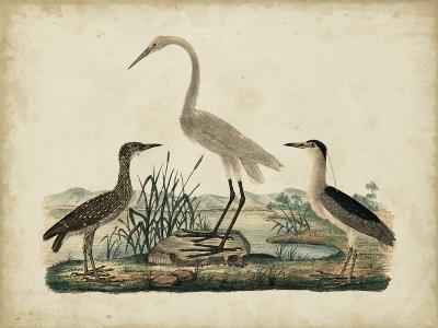 Great White Heron and Night Heron-Friedrich Strack-Art Print