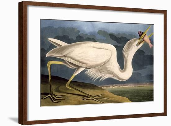 """Great White Heron from """"Birds of America""""-John James Audubon-Framed Premium Giclee Print"""