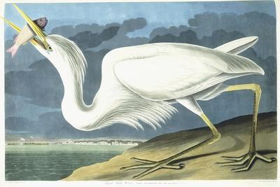 https://imgc.artprintimages.com/img/print/great-white-heron-male-adult-spring-plumage-1835_u-l-ppsbvt0.jpg?artPerspective=n