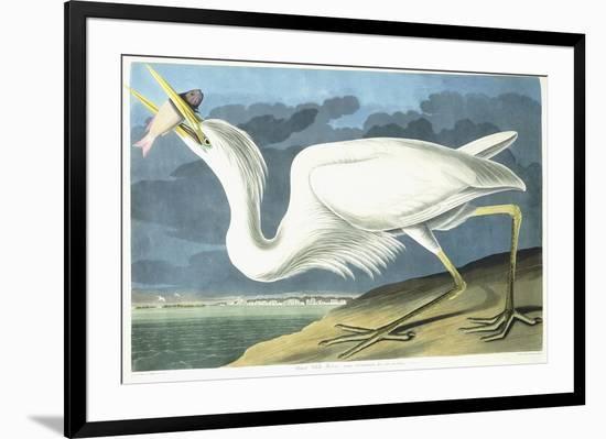 Great White Heron, Male Adult, Spring Plumage, 1835-John James Audubon-Framed Giclee Print