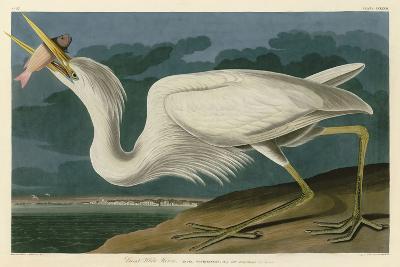 Great White Heron-John James Audubon-Art Print