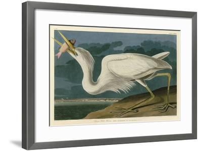 Great White Heron-John James Audubon-Framed Art Print