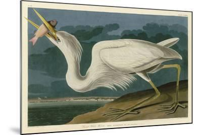 Great White Heron-John James Audubon-Mounted Art Print