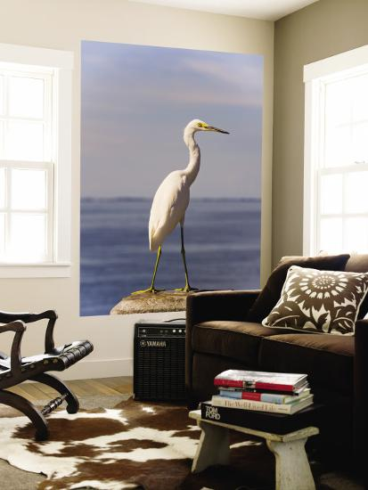 Great White Heron-Thomas Winz-Wall Mural