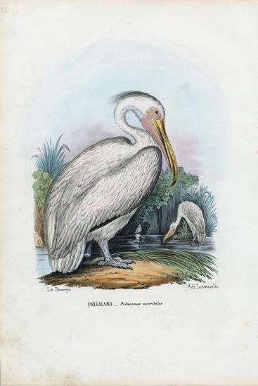 Great White Pelican, 1863-79-Raimundo Petraroja-Giclee Print