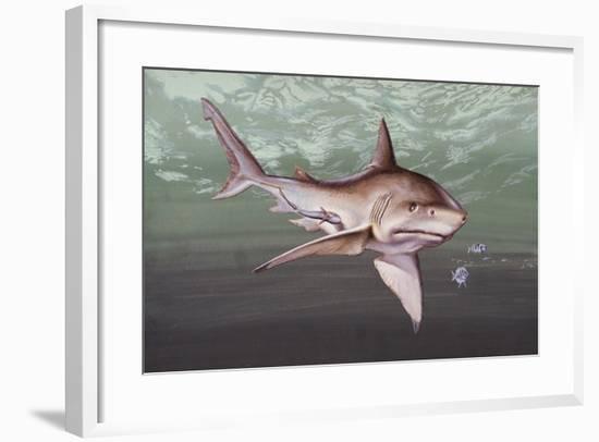 Great White Shark (Carcharodon Carcharias), Lamnidae--Framed Giclee Print