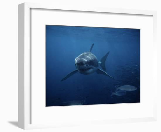 Great White Shark, Swimming, South Australia-Gerard Soury-Framed Photographic Print
