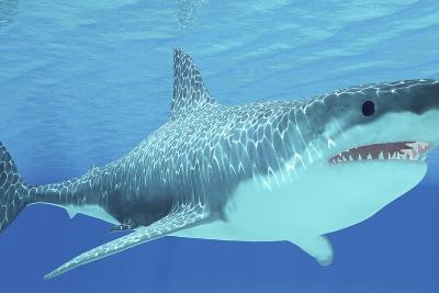 Great White Shark Swimming Underwater--Art Print
