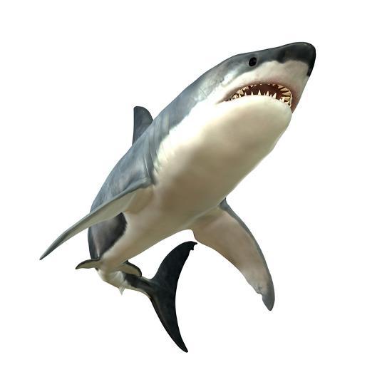 Great White Shark--Art Print
