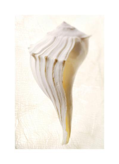 Great White Shell-Glen and Gayle Wans-Giclee Print