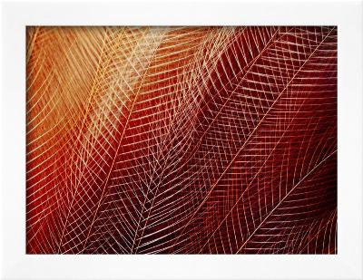 Greater Bird of Paradise Plumage, Paradisaea Apoda, Papua New Guinea-Frans Lanting-Framed Photographic Print