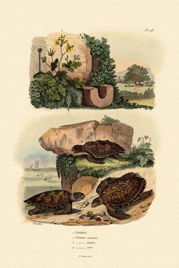 Greater Celandine, 1833-39--Giclee Print