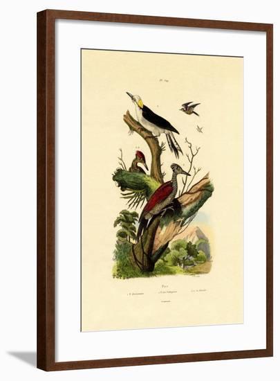 Greater Flameback, 1833-39--Framed Giclee Print