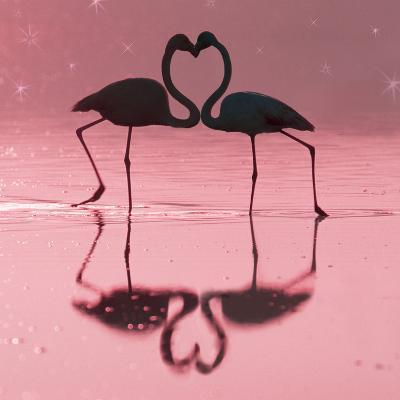 Greater Flamingo Pair Kissing--Photographic Print