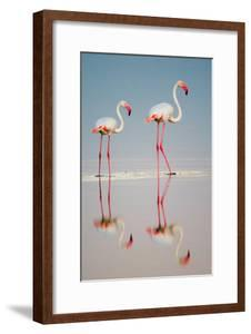 Greater Flamingos (Phoenicopterus Roseus) in a Lake, Ndutu, Ngorongoro Conservation Area, Tanzania