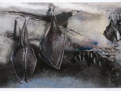 Greater Horseshoe (Bat Rhinolophus Ferrumequinum), Illustration--Photographic Print