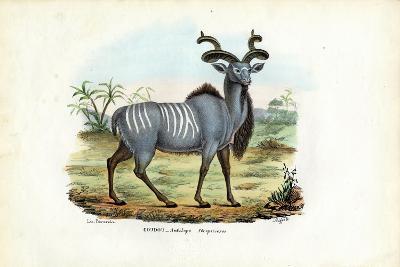 Greater Kudu, 1863-79-Raimundo Petraroja-Giclee Print
