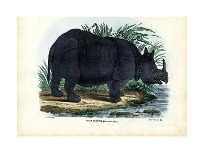 Greater One-Horned Rhinoceros, 1863-79-Raimundo Petraroja-Giclee Print