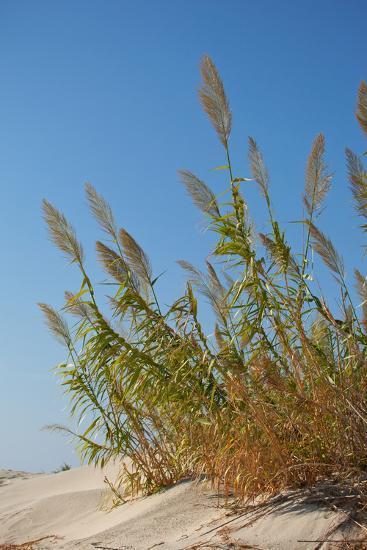 Greece, Crete, Elafonisi, Dune Grass, Nature Conservation-Catharina Lux-Photographic Print