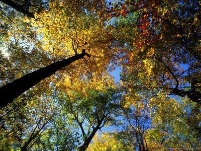 Greeley Ponds Trail, Northern Hardwood Forest, New Hampshire, USA-Jerry & Marcy Monkman-Photographic Print